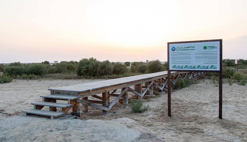P&G - Carrefour - forestation programmes - UAE - techxmedia