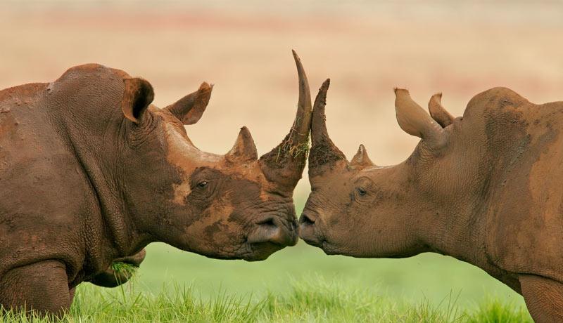 world-rhino-day-2021 - ThreatQuotient - cybersecurity-industry -techxmedia